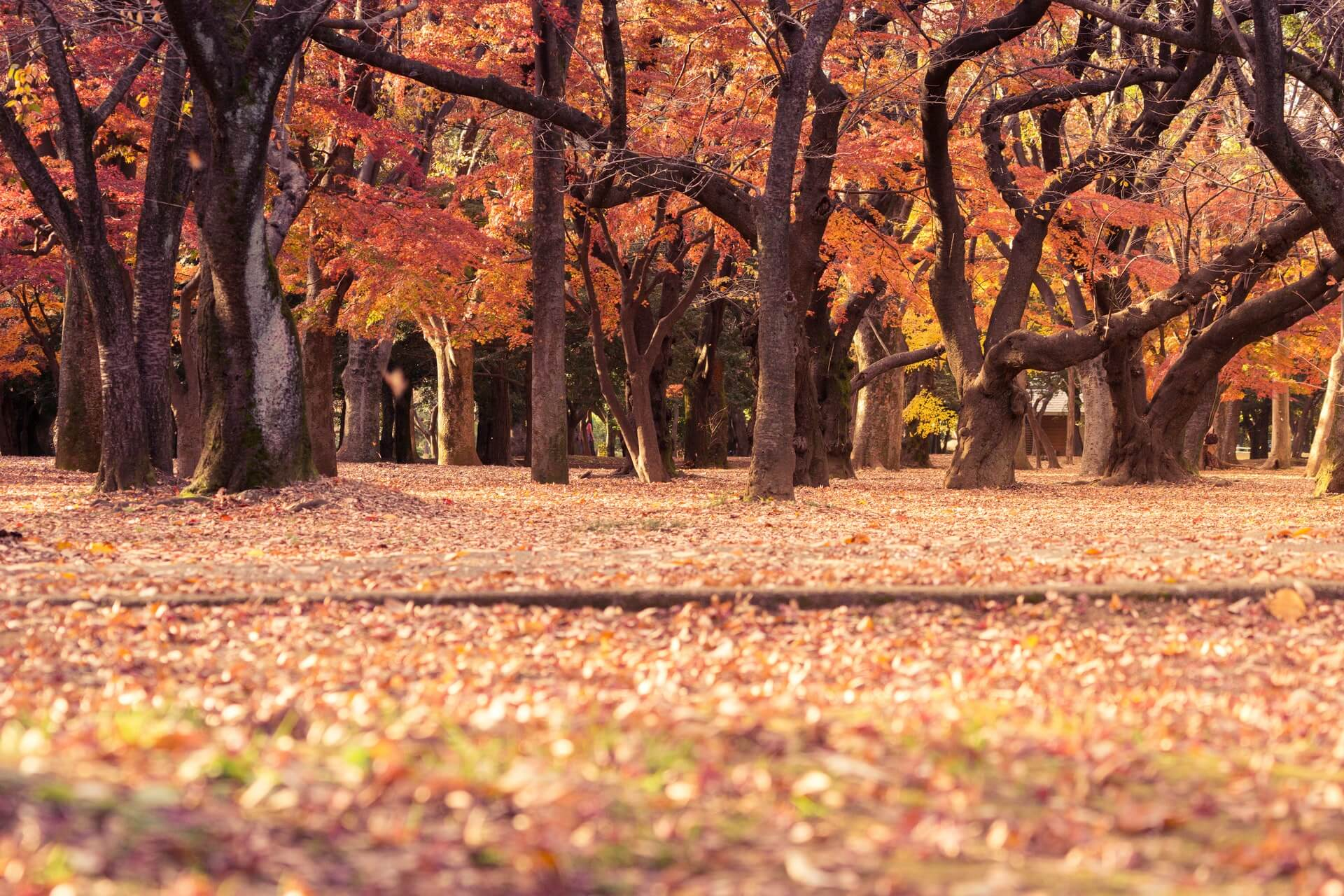 Fairfield County Landscaping, Inc. fall lawn cleanup